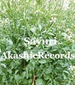 アカシックレコードリーダーさゆり ルッコラ アカシックレコードリーディング