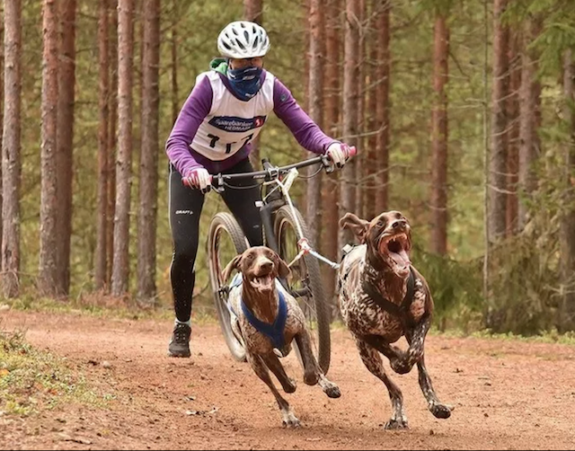 dogscooter.png