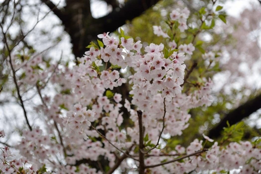 令和最初に~続・季節の花