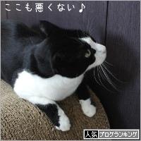 dai20190513_banner.jpg