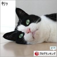 dai20190515_banner.jpg