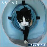 dai20190516_banner.jpg