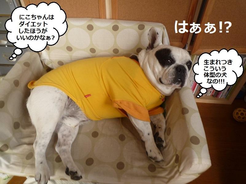 にこら201011to201108 3324