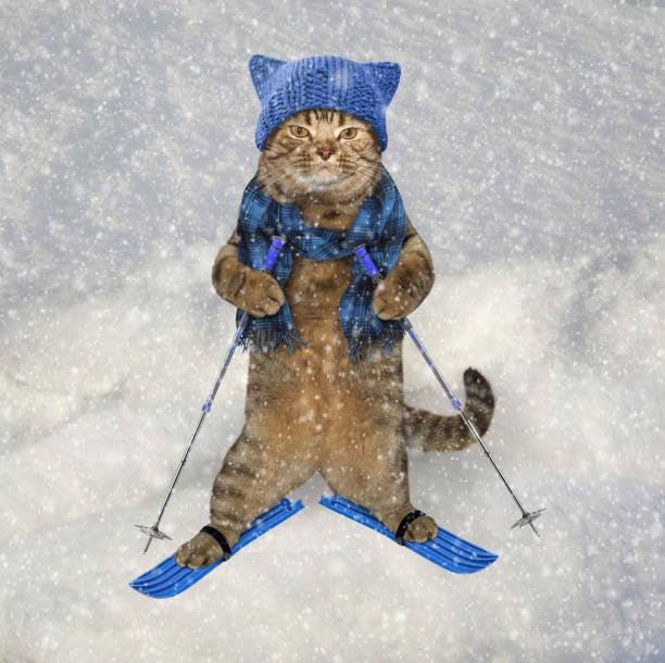 0410ねこはスキーは好きじゃないと思う