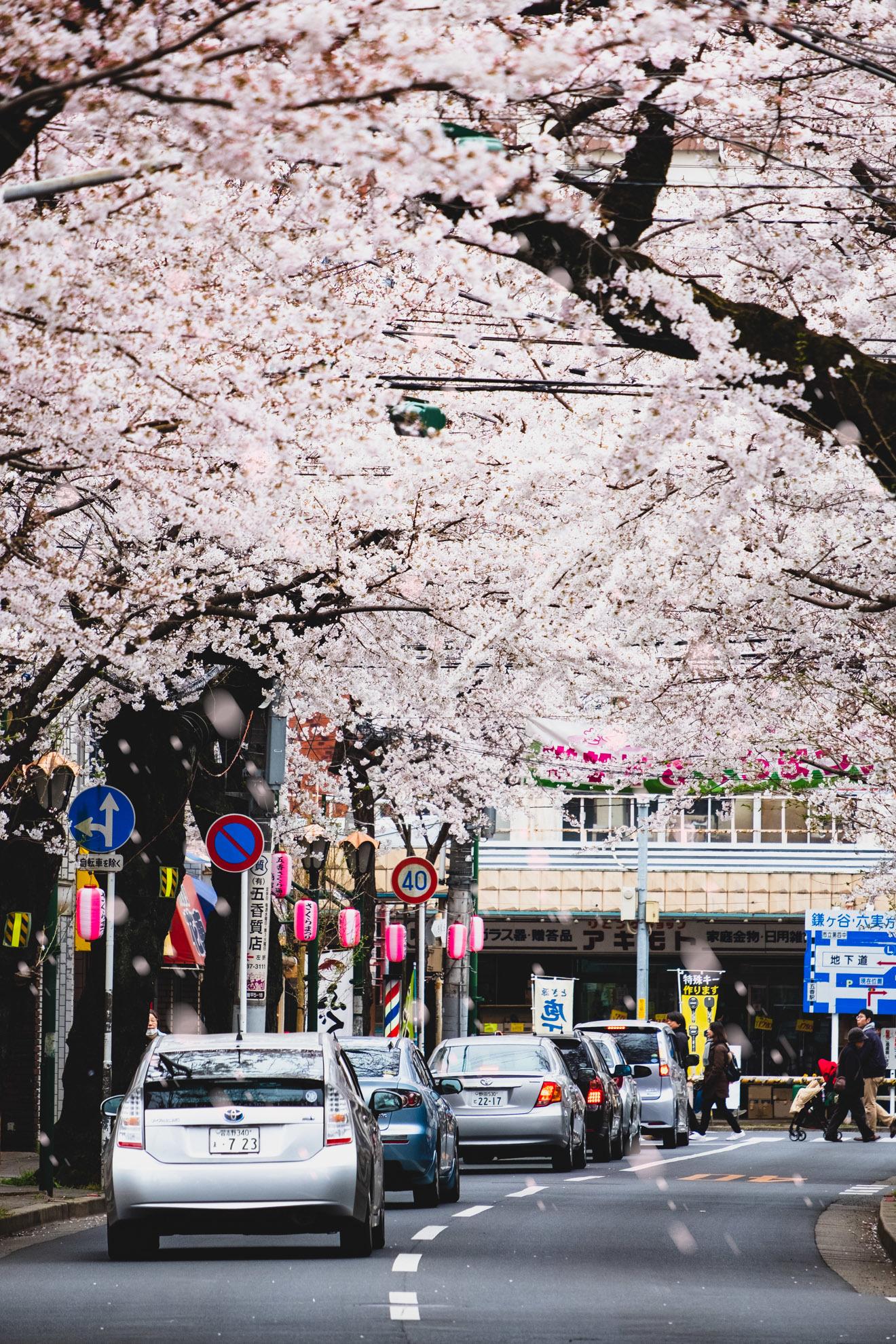 桜まつり2019_04