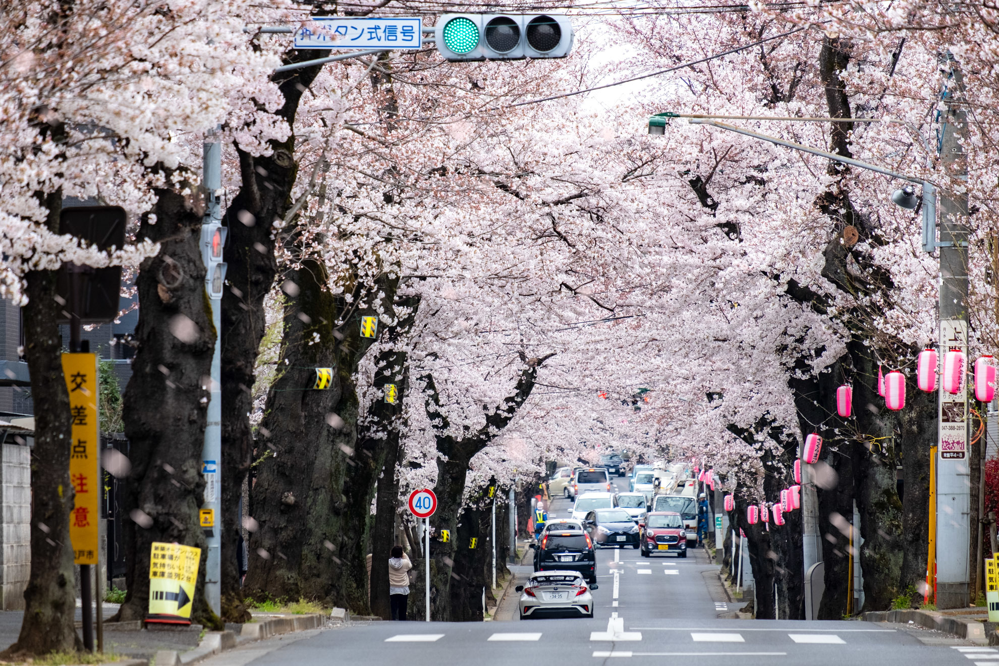 桜まつり2019_02
