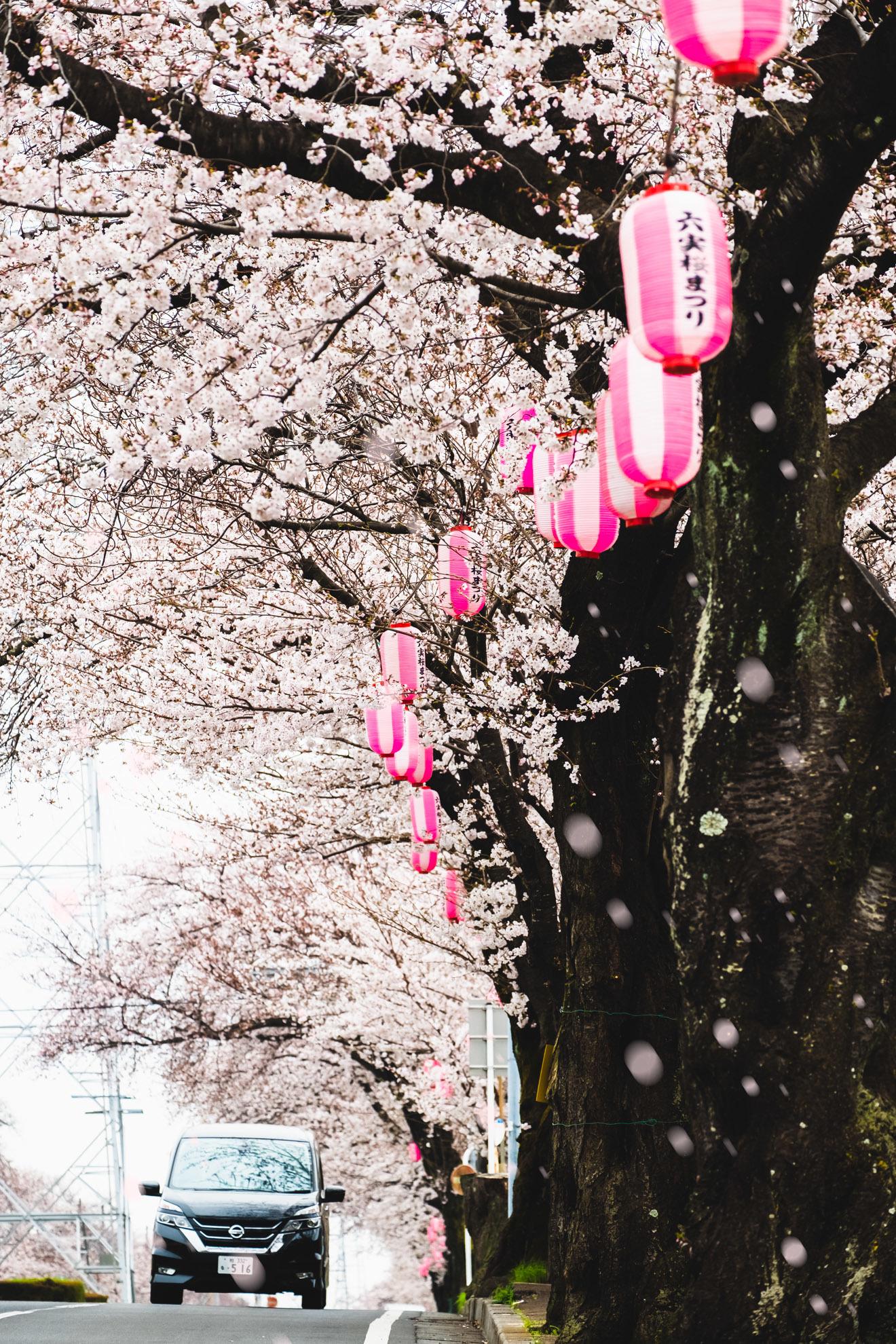 桜まつり2019_01