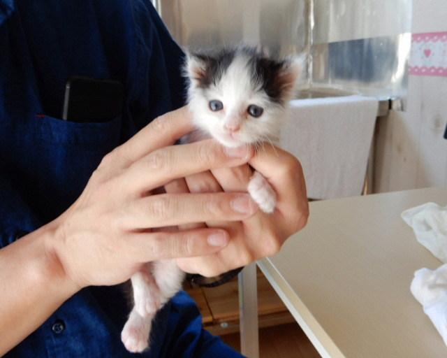 里親 の 生まれ たばかり 子猫