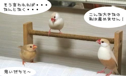 ほのぼのなぴーち_1