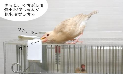 ほのぼのなぴーち_4