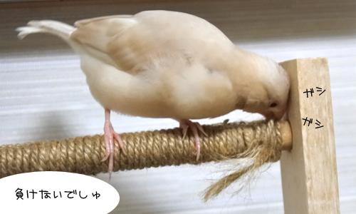 ほのぼのなぴーち_5