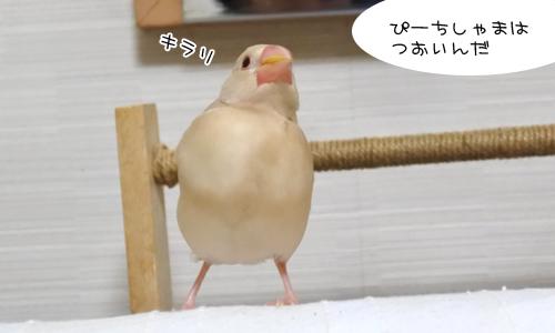 ほのぼのなぴーち_7