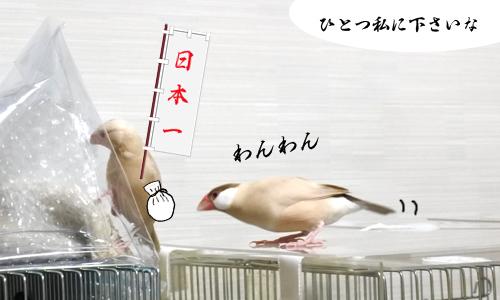桃太郎_1