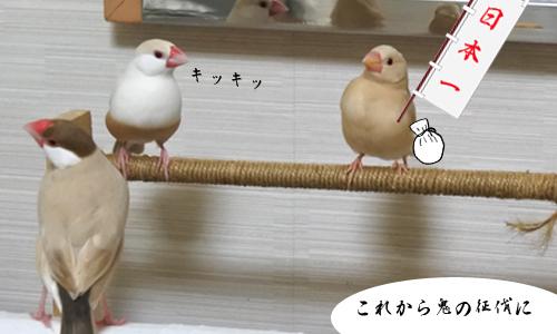 桃太郎_2