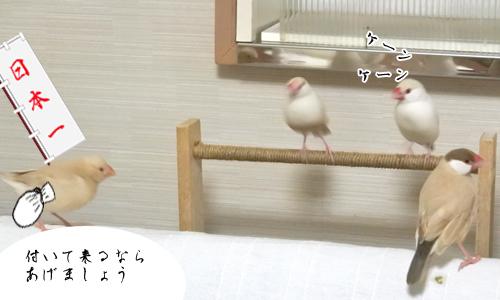 桃太郎_3