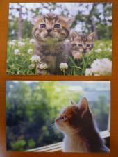 ねこのポストカード