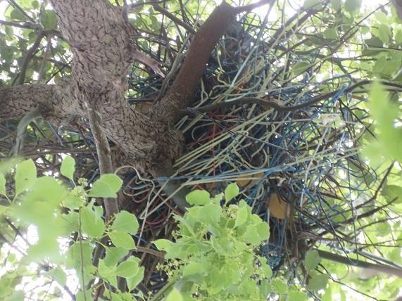 5E02 カラスの巣 ワイヤーハンガー 0512