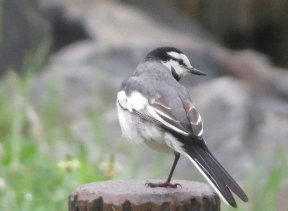 2A02 野鳥 0605