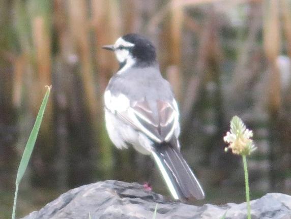 4A04 野鳥 0605