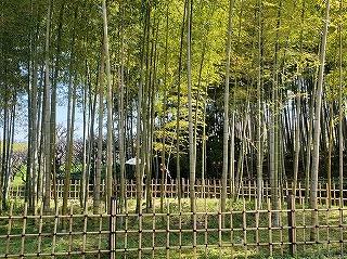 s-万博公園竹林