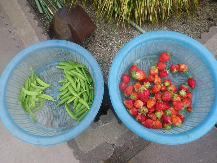 収穫1_19_05_01
