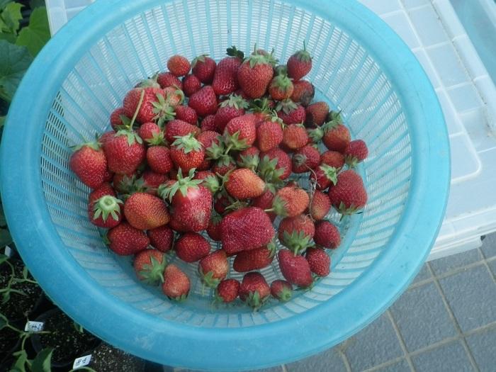 収穫19_05_05