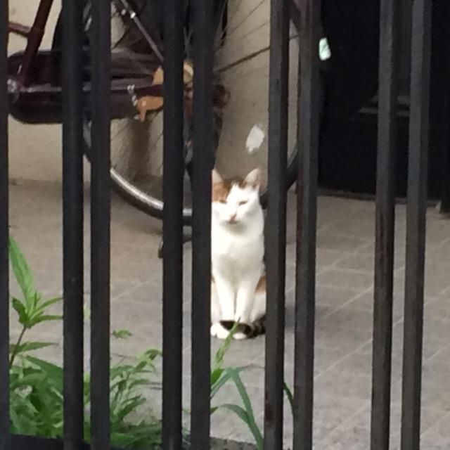 今日の遭遇猫(2015/10/15)