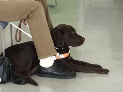 ボーイスカウト盲導犬4
