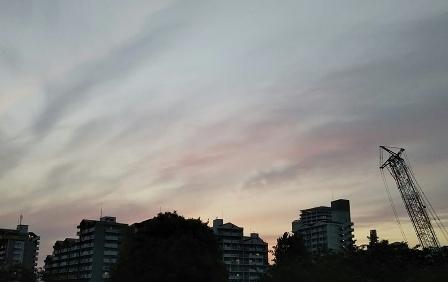2019.5.8武蔵国分寺公園から (2)
