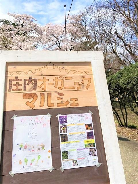 庄内オーガニックマルシェ 松ヶ丘 桜まつり1