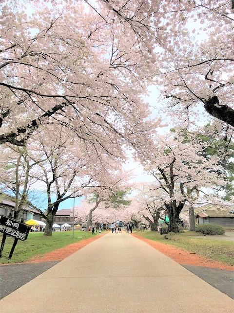庄内オーガニックマルシェ 松ヶ丘 桜まつり4