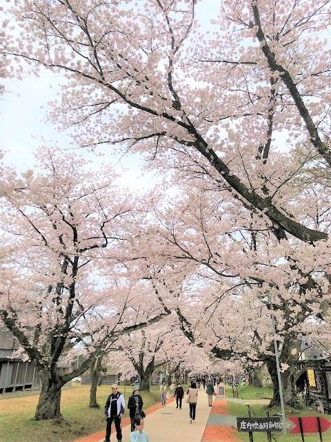 庄内オーガニックマルシェ 松ヶ丘 桜まつり6