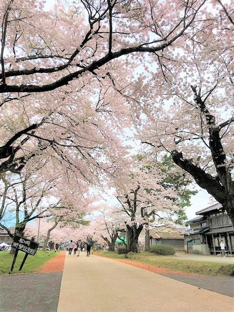 庄内オーガニックマルシェ 松ヶ丘 桜まつり7