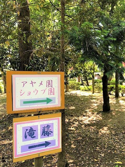 鶴岡公園 2019滝藤2