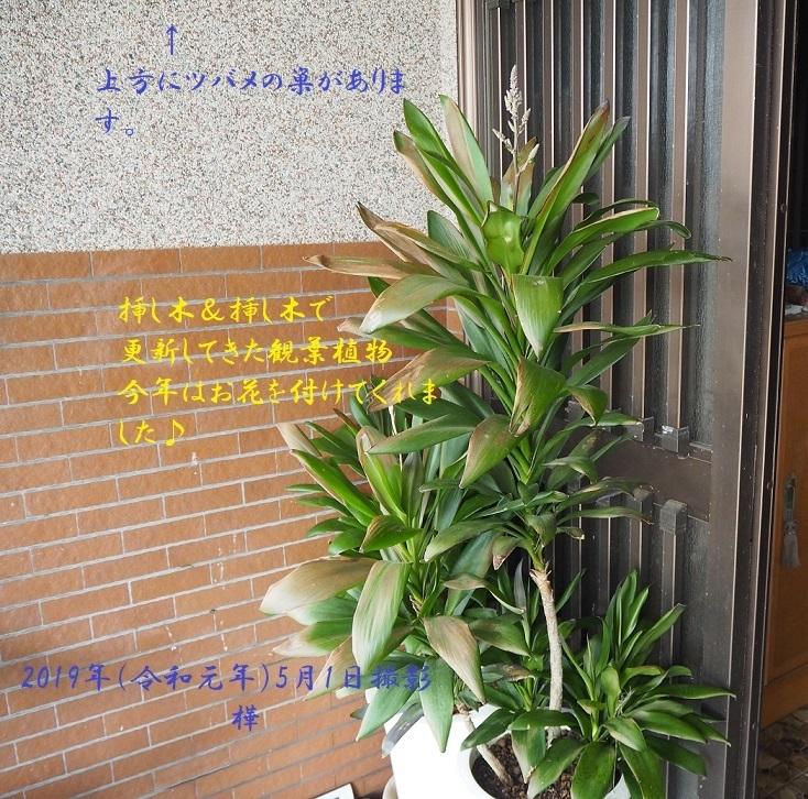 ③観葉植物全景 - pe