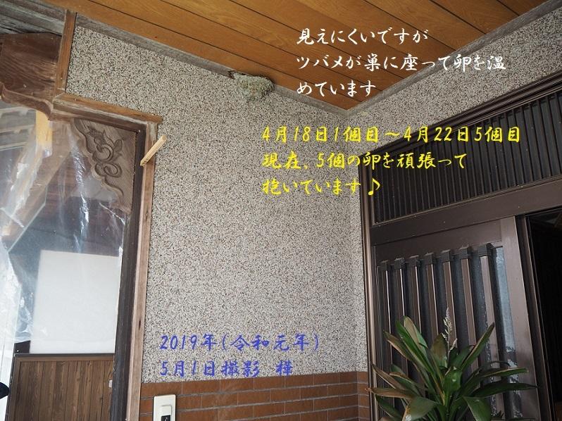 ④観葉植物&ツバメの巣- コピー