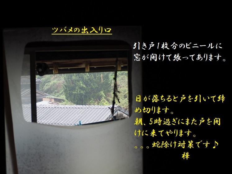 ②2019年5月28日撮影・長屋窓 -pe