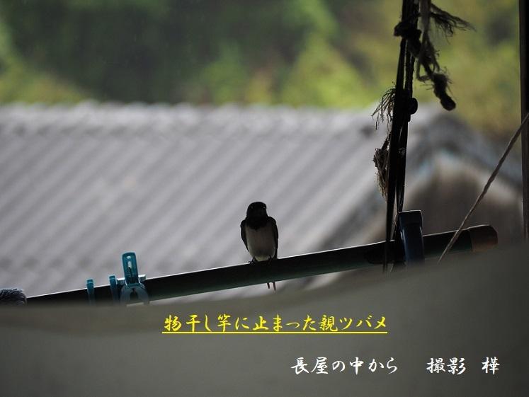 ③2019年5月28日撮影・長屋外親ーpe