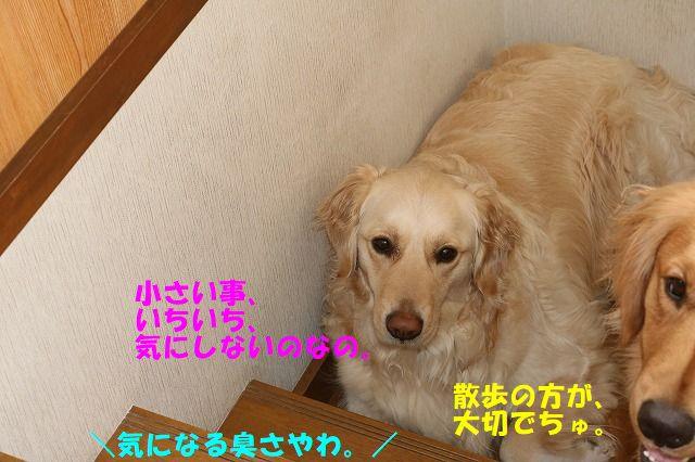 IMG_6272.jpg