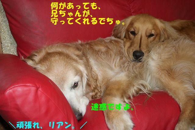 IMG_6521.jpg