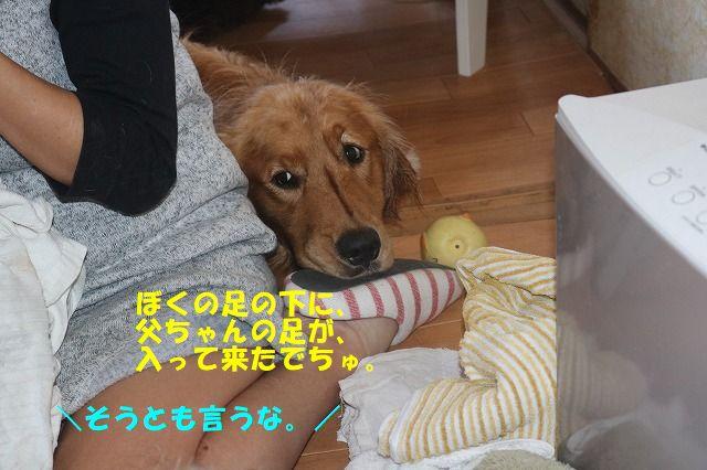 IMG_6574_20190509000940bf2.jpg