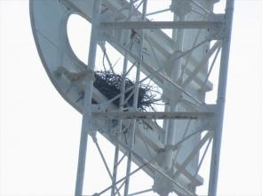 190512006 電波塔のカラスの巣
