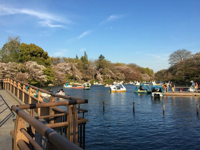 20190413井の頭公園8