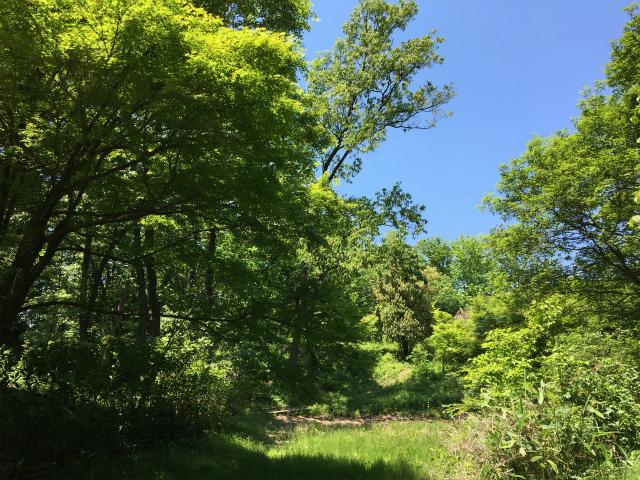 20190517森林公園2