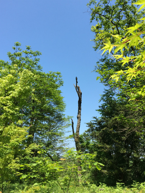 20190517森林公園3