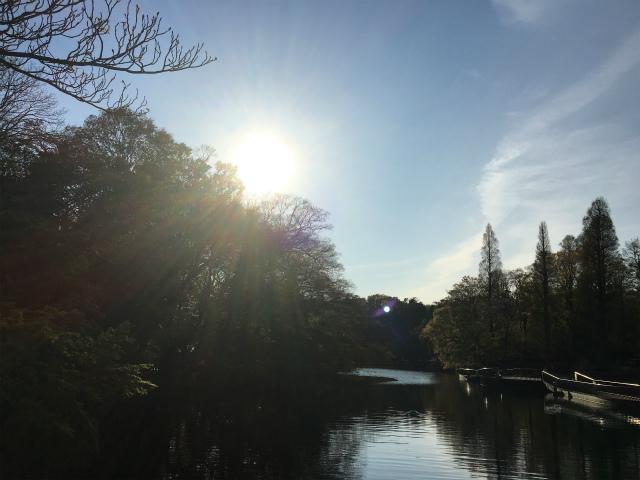 20190413井の頭公園2