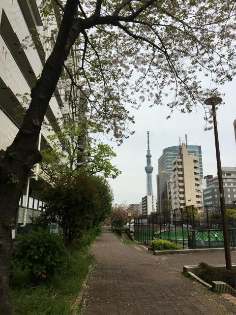 2019春東京