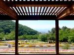緑花センター(パノラマ花壇)