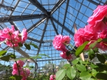 四季の郷公園バラ温室
