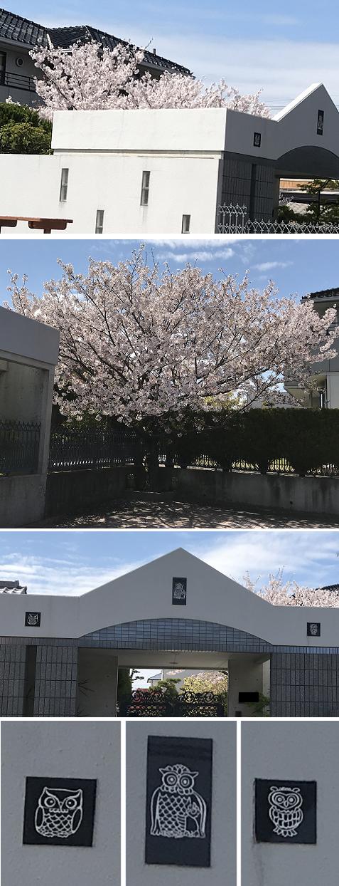 20190412桜とフクロウ